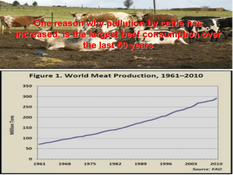 Beef was consumed as early as the Neolithic period, and in this period there are the first signs of animal breeding