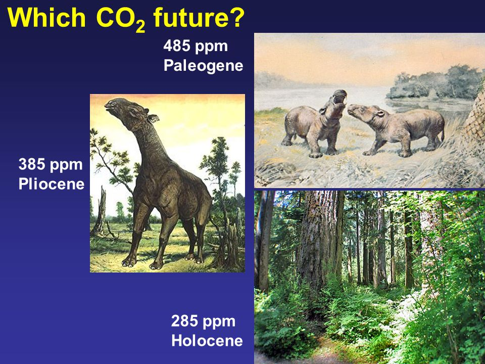 Which CO 2 future 285 ppm Holocene 385 ppm Pliocene 485 ppm Paleogene