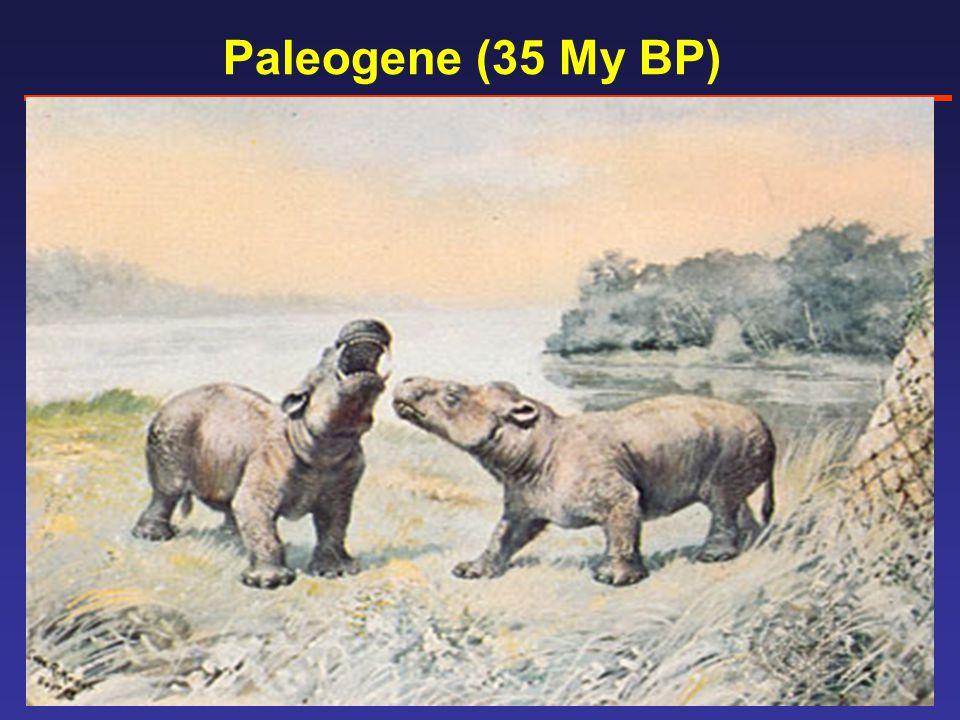 Paleogene (35 My BP)