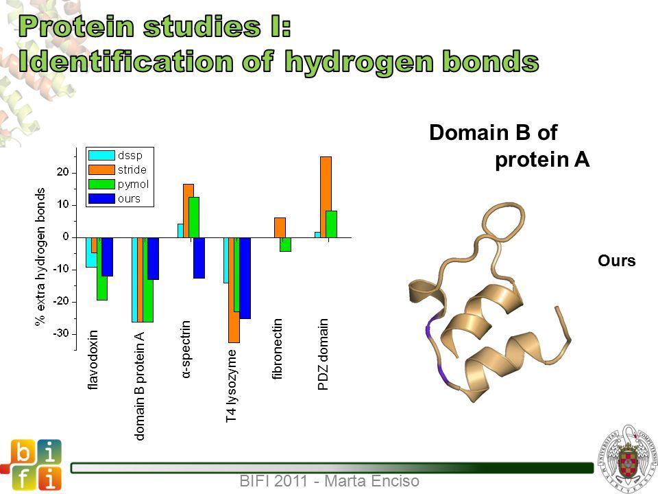 BIFI 2011 - Marta Enciso Domain B of protein A DSSPSTRIDE PyMOLOurs flavodoxin domain B protein A α-spectrin T4 lysozyme fibronectin PDZ domain