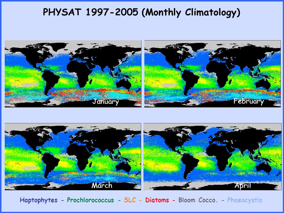 PHYSAT 1997-2005 (Monthly Climatology) Haptophytes - Prochlorococcus - SLC - Diatoms - Bloom Cocco. - Phaeocystis January February MarchApril