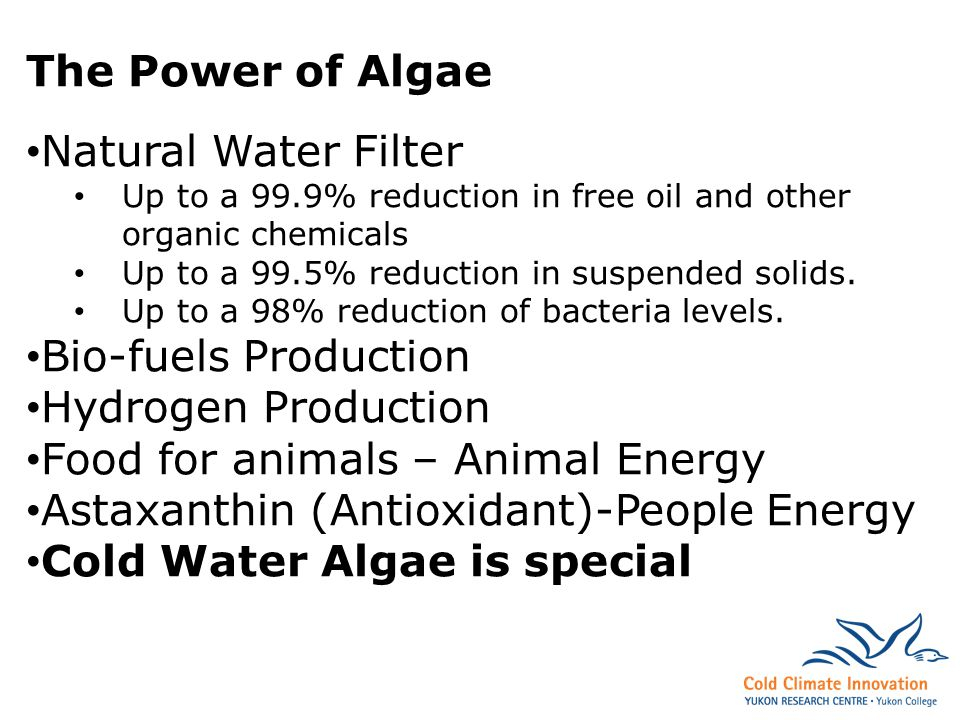 The Power of Algae Natural Water Filter Up to a 99.9% reduction in free oil and other organic chemicals Up to a 99.5% reduction in suspended solids.