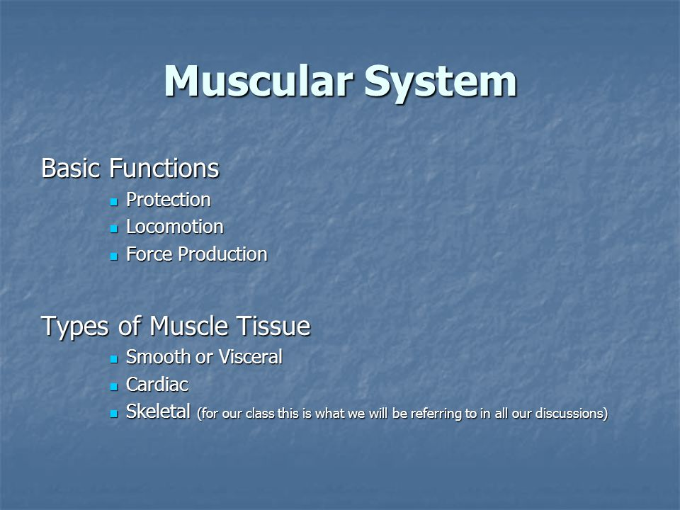Muscular System Basic Functions Protection Protection Locomotion Locomotion Force Production Force Production Types of Muscle Tissue Smooth or Visceral Smooth or Visceral Cardiac Cardiac Skeletal (for our class this is what we will be referring to in all our discussions) Skeletal (for our class this is what we will be referring to in all our discussions)