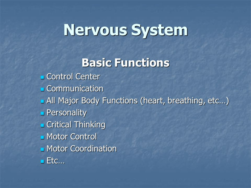 Nervous System Basic Functions Control Center Control Center Communication Communication All Major Body Functions (heart, breathing, etc…) All Major Body Functions (heart, breathing, etc…) Personality Personality Critical Thinking Critical Thinking Motor Control Motor Control Motor Coordination Motor Coordination Etc… Etc…