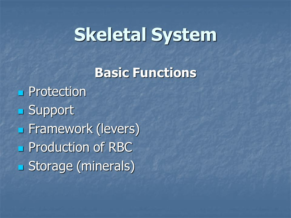 Skeletal System Basic Functions Protection Protection Support Support Framework (levers) Framework (levers) Production of RBC Production of RBC Storage (minerals) Storage (minerals)