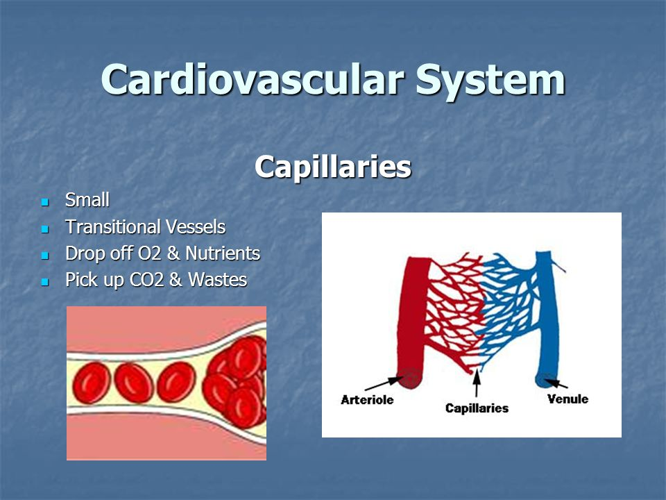 Cardiovascular System Capillaries Small Small Transitional Vessels Transitional Vessels Drop off O2 & Nutrients Drop off O2 & Nutrients Pick up CO2 & Wastes Pick up CO2 & Wastes