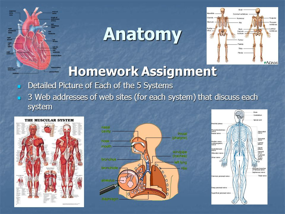 Anatomy Homework Assignment Detailed Picture of Each of the 5 Systems Detailed Picture of Each of the 5 Systems 3 Web addresses of web sites (for each system) that discuss each system 3 Web addresses of web sites (for each system) that discuss each system