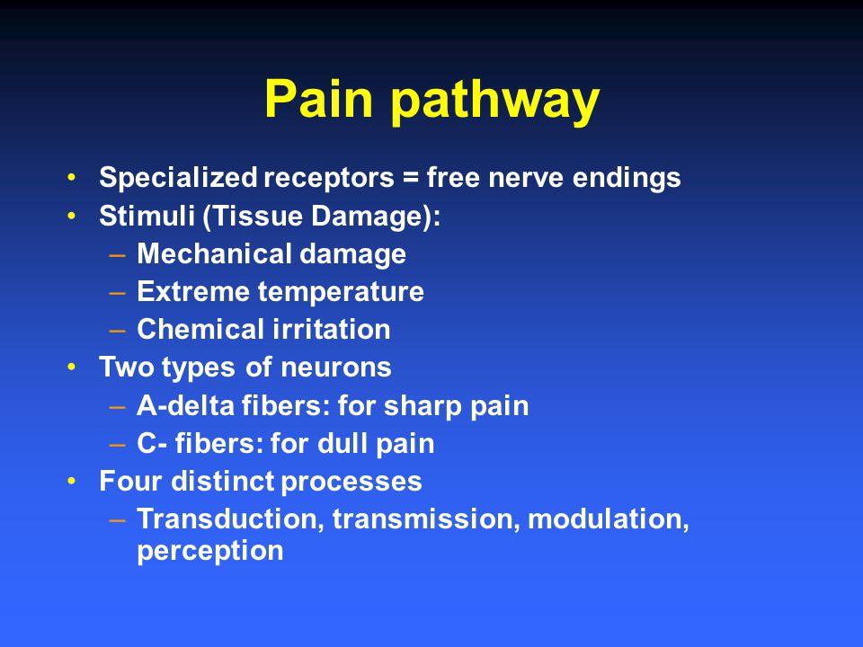 Pain pathway Specialized receptors = free nerve endings Stimuli (Tissue Damage): –Mechanical damage –Extreme temperature –Chemical irritation Two type