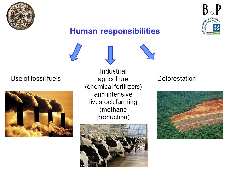 Human responsibilities Use of fossil fuels Industrial agricolture (chemical fertilizers) and intensive livestock farming (methane production) Deforest