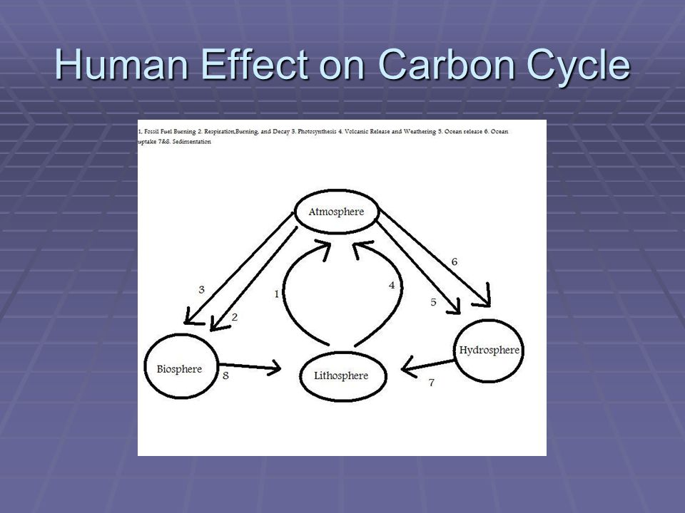 Human Effect on Carbon Cycle
