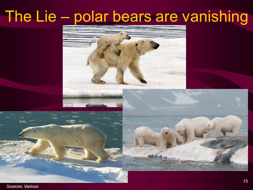 15 The Lie – polar bears are vanishing Sources: Various
