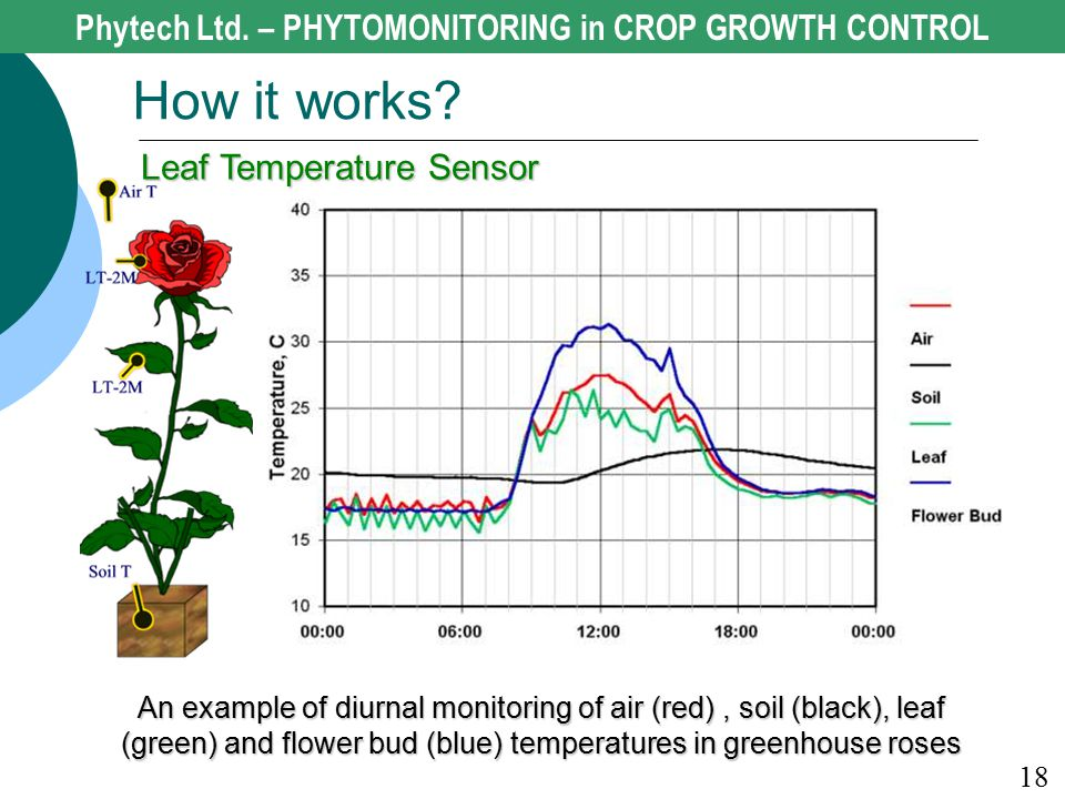 An example of diurnal monitoring of air (red), soil (black), leaf (green) and flower bud (blue) temperatures in greenhouse roses 18 How it works? Phyt