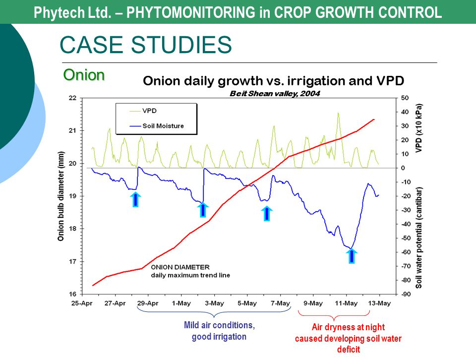 Phytech Ltd. – PHYTOMONITORING in CROP GROWTH CONTROL CASE STUDIES Onion Mild air conditions, good irrigation Air dryness at night caused developing s