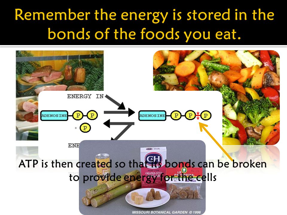 ATP is then created so that its bonds can be broken to provide energy for the cells