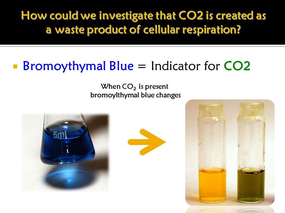 CO2  Bromoythymal Blue = Indicator for CO2 When CO 2 is present bromoylthymal blue changes