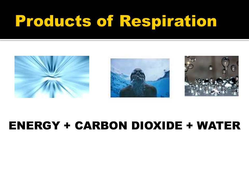 Products of Respiration ENERGY + CARBON DIOXIDE + WATER