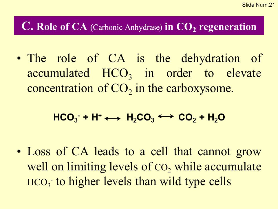 C. Role of CA (Carbonic Anhydrase) in CO 2 regeneration The role of CA is the dehydration of accumulated HCO 3 in order to elevate concentration of CO