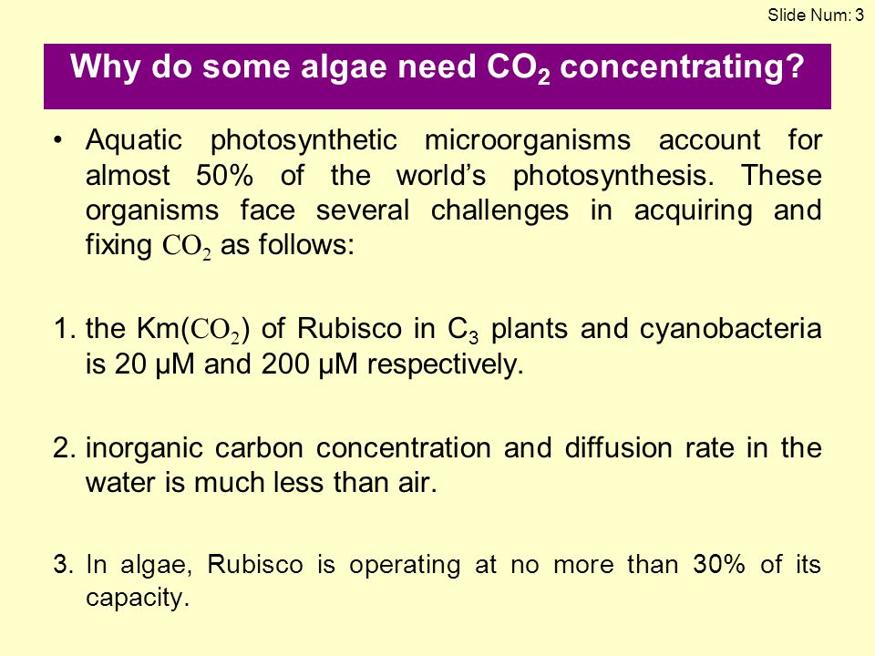 Why do some algae need CO 2 concentrating? Aquatic photosynthetic microorganisms account for almost 50% of the world's photosynthesis. These organisms