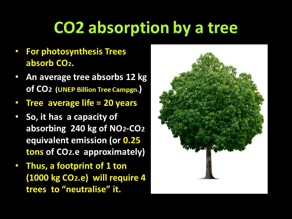 CO2 absorption by a tree For photosynthesis Trees absorb CO 2. An average tree absorbs 12 kg of CO 2 (UNEP Billion Tree Campgn. ) Tree average life =