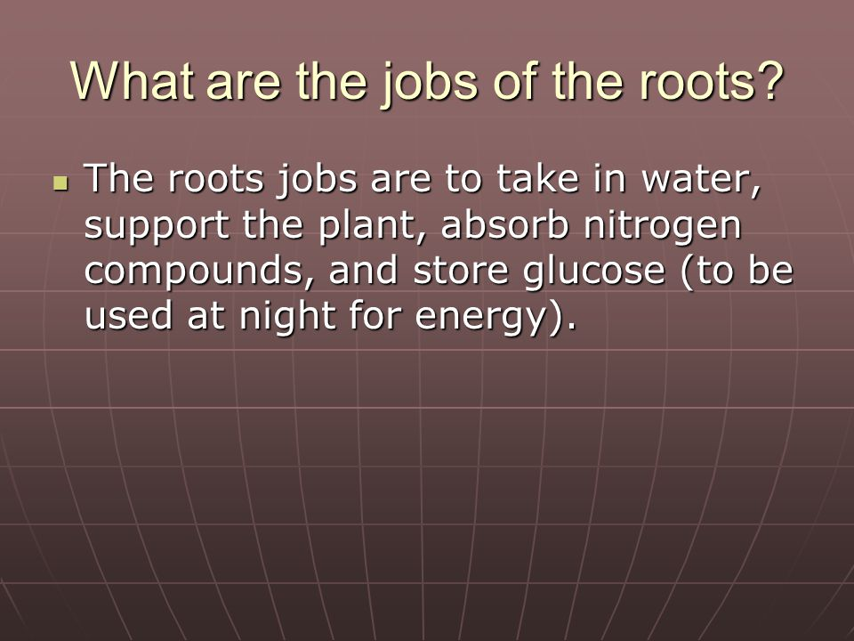 What part of the plant traps the sun's energy.