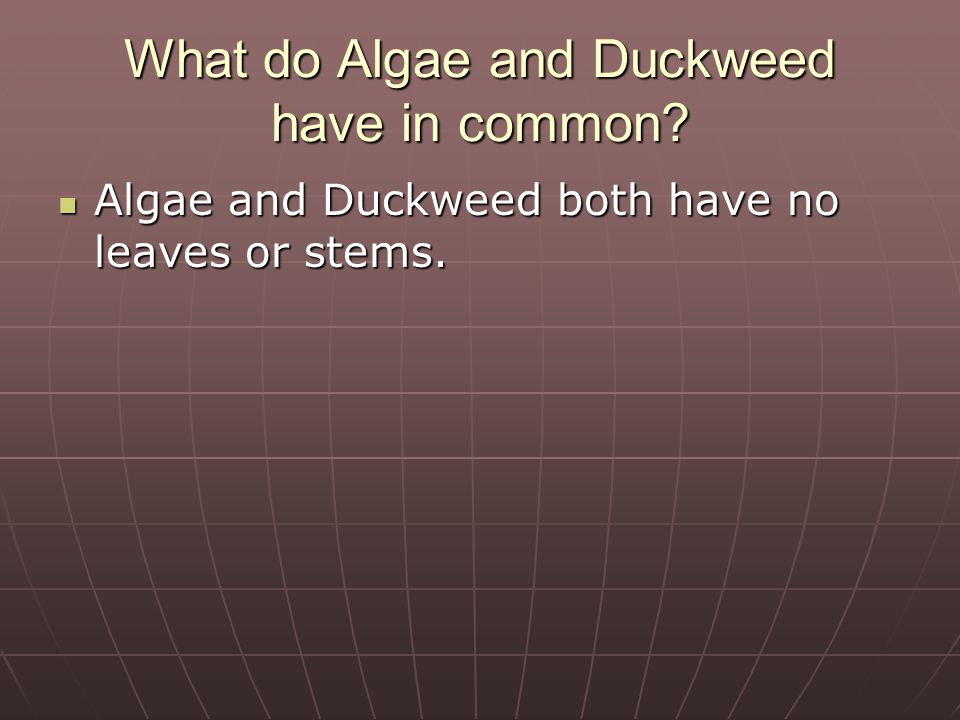 Describe how Elodea and Duckweed are different. Elodea has leaves and a stem.