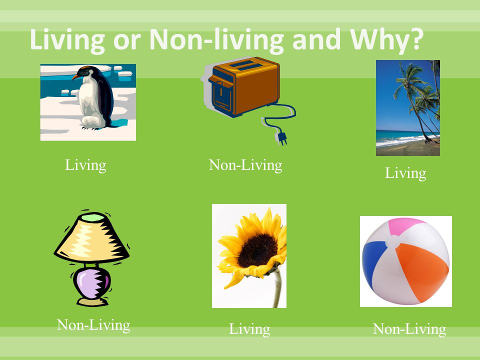 Living Non-Living