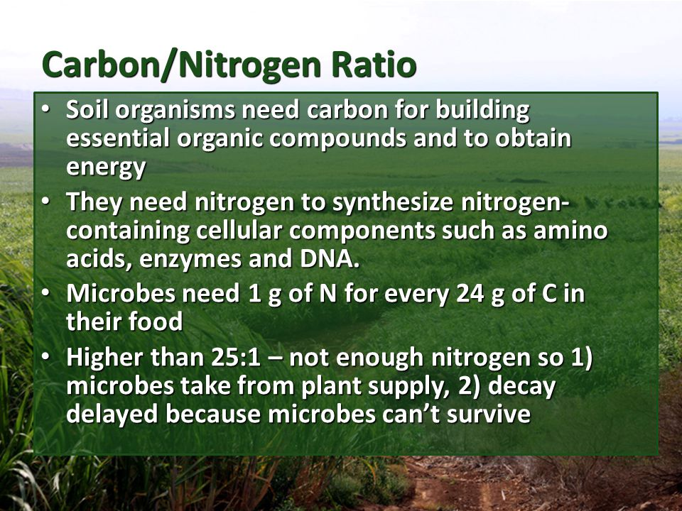 Significance of C/N Ratio Adding readily decomposable organic material increases the consumption of microbial community which results in high CO2 yield.