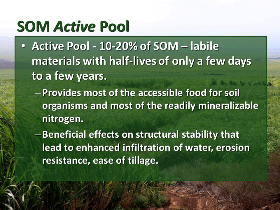 SOM Passive Pool Passive Pool – 60-90 % of SOM – materials remaining in soil for hundreds or thousands of years.