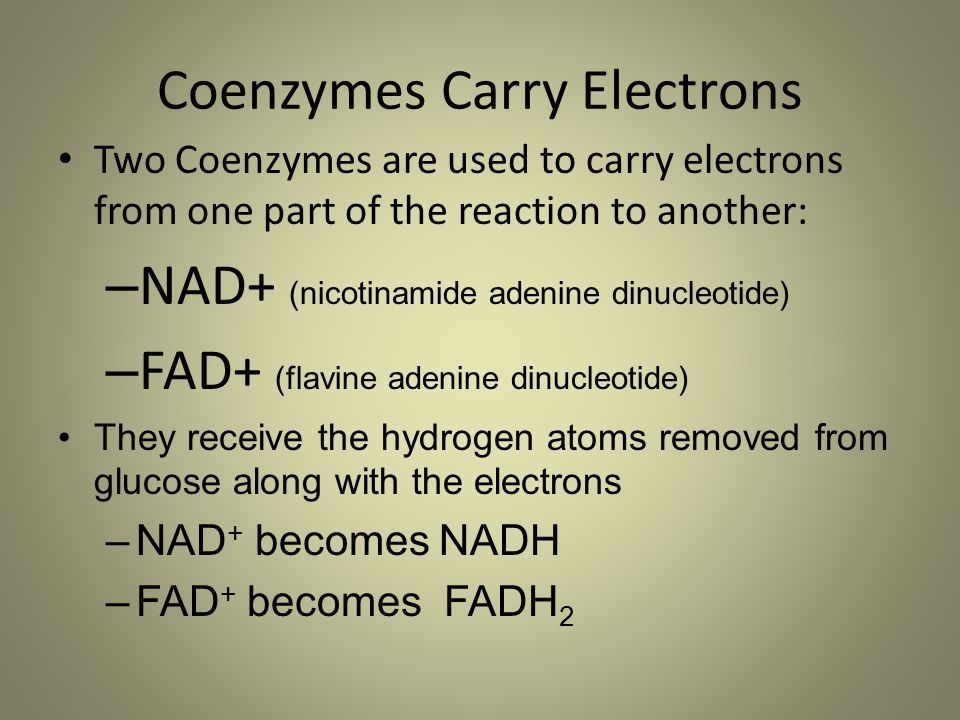 Coenzymes Carry Electrons Two Coenzymes are used to carry electrons from one part of the reaction to another: – NAD+ (nicotinamide adenine dinucleotid