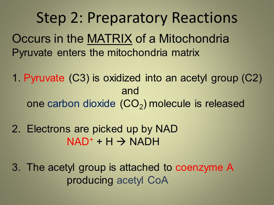 Step 2: Preparatory Reactions Occurs in the MATRIX of a Mitochondria Pyruvate enters the mitochondria matrix 1. Pyruvate (C3) is oxidized into an acet