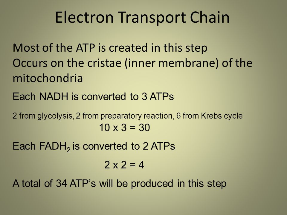 Each NADH is converted to 3 ATPs 2 from glycolysis, 2 from preparatory reaction, 6 from Krebs cycle 10 x 3 = 30 Each FADH 2 is converted to 2 ATPs 2 x