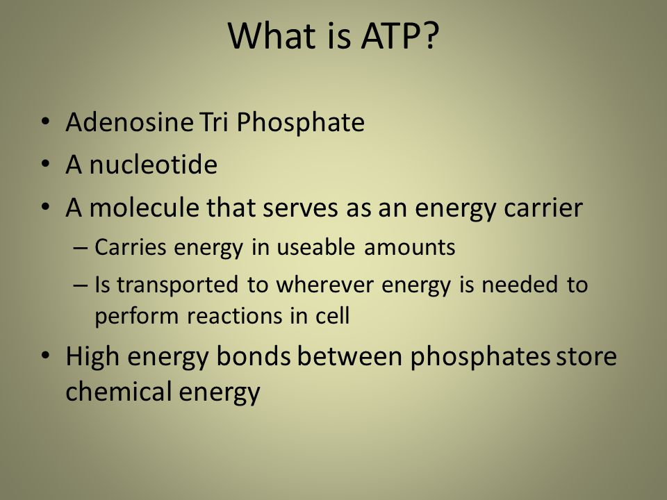 What is ATP? Adenosine Tri Phosphate A nucleotide A molecule that serves as an energy carrier – Carries energy in useable amounts – Is transported to