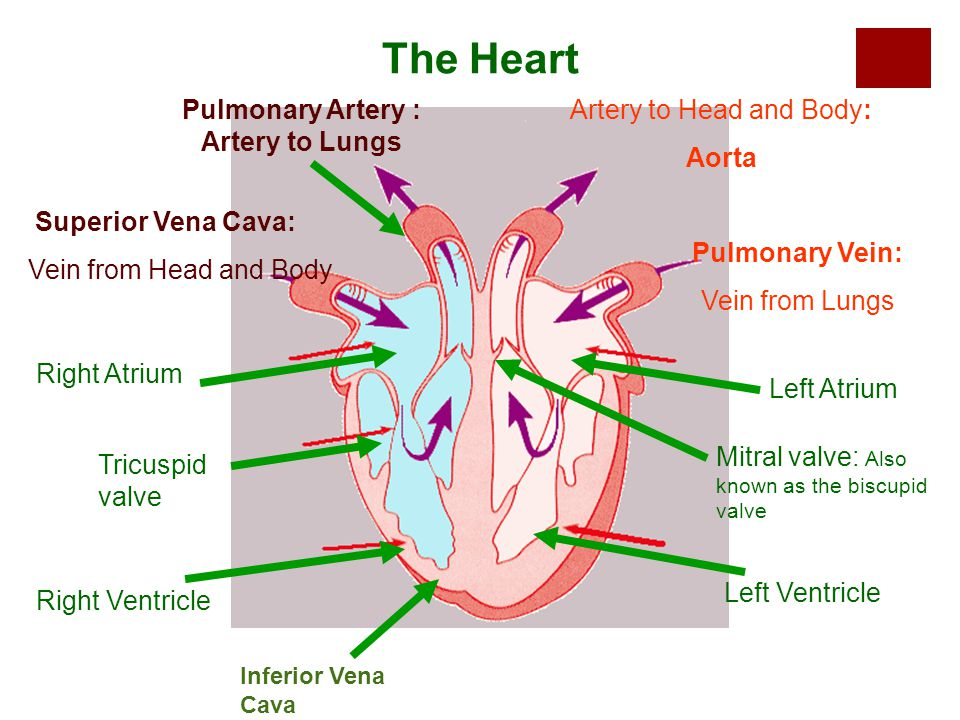 Map of the Heart Activity