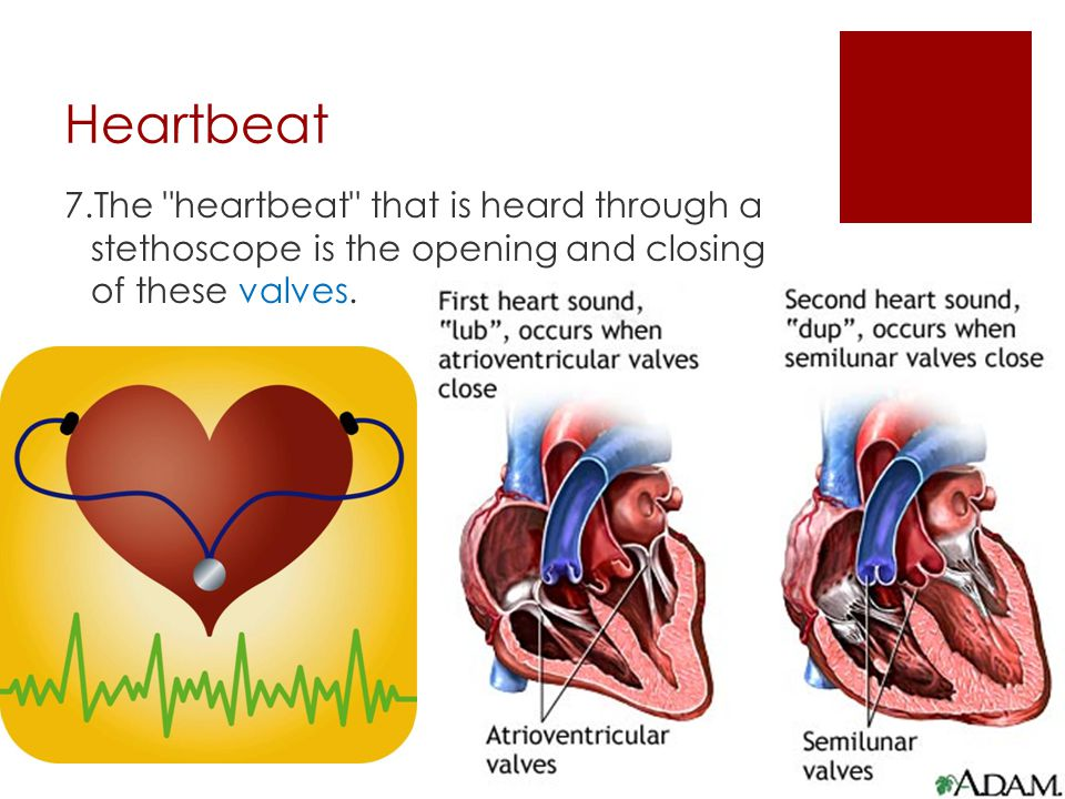 Ventricles  When the heart contracts, the blood is pushed out of the heart.  Another valve keeps the blood from running back into the ventricle.