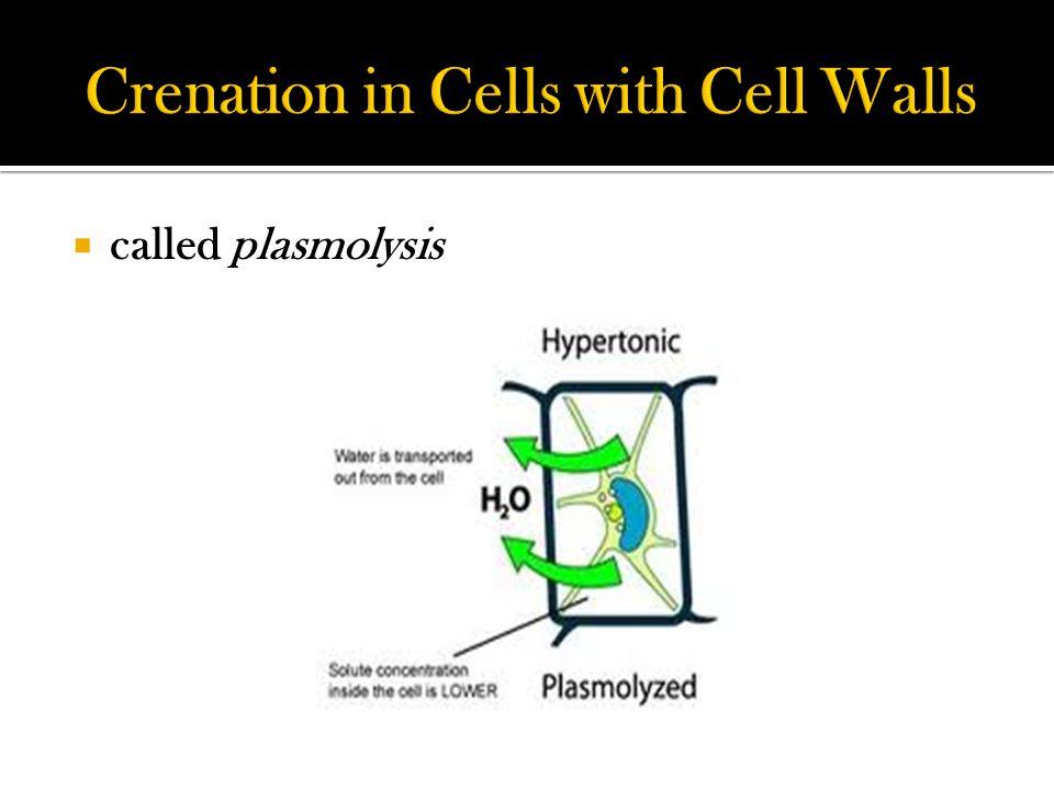  called plasmolysis