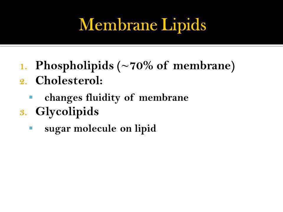 1. Phospholipids (~70% of membrane) 2. Cholesterol:  changes fluidity of membrane 3.