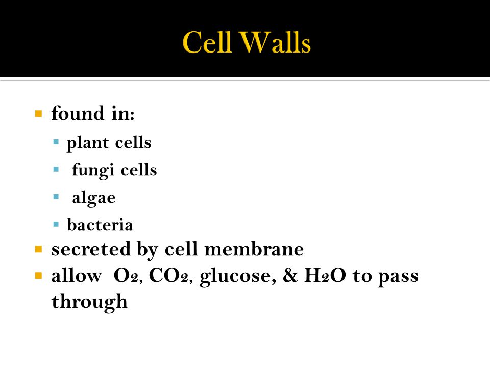  found in:  plant cells  fungi cells  algae  bacteria  secreted by cell membrane  allow O 2, CO 2, glucose, & H 2 O to pass through