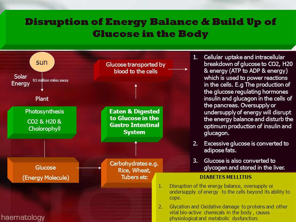 Sun Plant Solar Energy Photosynthesis CO2 & H20 & Cholorophyll Glucose (Energy Molecule) Carbohydrates e.g. Rice, Wheat, Tubers etc Eaten & Digested t