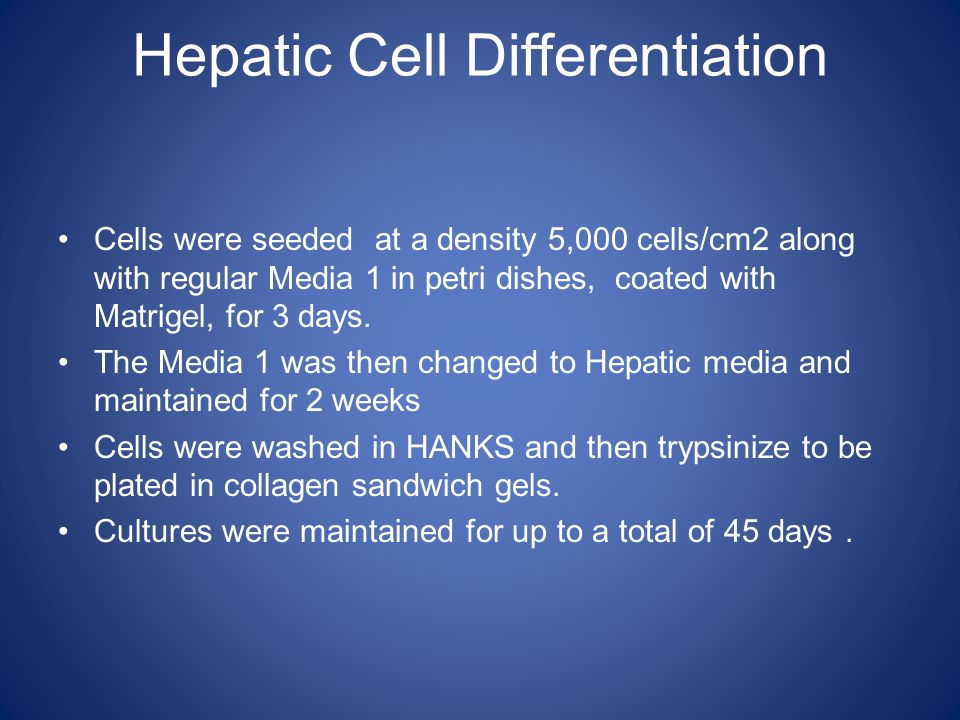 Hepatic Cell Differentiation Cells were seeded at a density 5,000 cells/cm2 along with regular Media 1 in petri dishes, coated with Matrigel, for 3 da