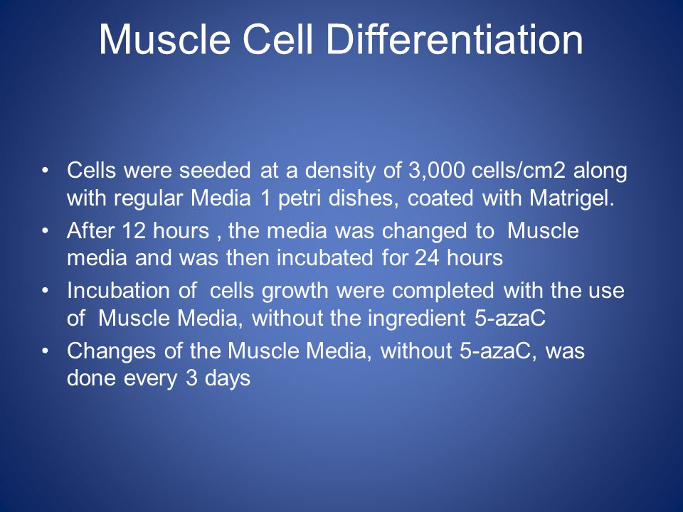 Muscle Cell Differentiation Cells were seeded at a density of 3,000 cells/cm2 along with regular Media 1 petri dishes, coated with Matrigel.