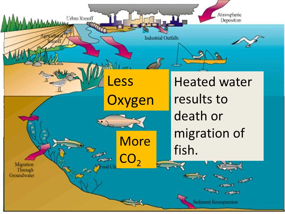 Heated water results to death or migration of fish. More CO 2 Less Oxygen