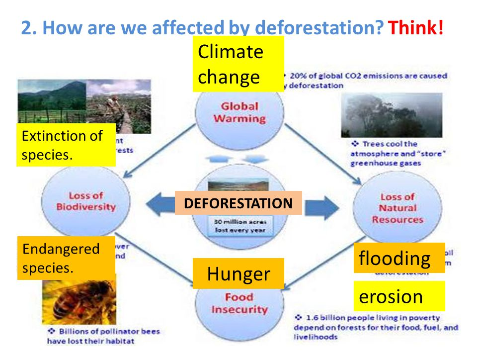 2. How are we affected by deforestation? Think! flooding erosion Endangered species. Extinction of species. Climate change Hunger DEFORESTATION