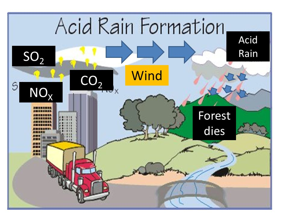 Wind SO 2 CO 2 NO X Acid Rain Forest dies