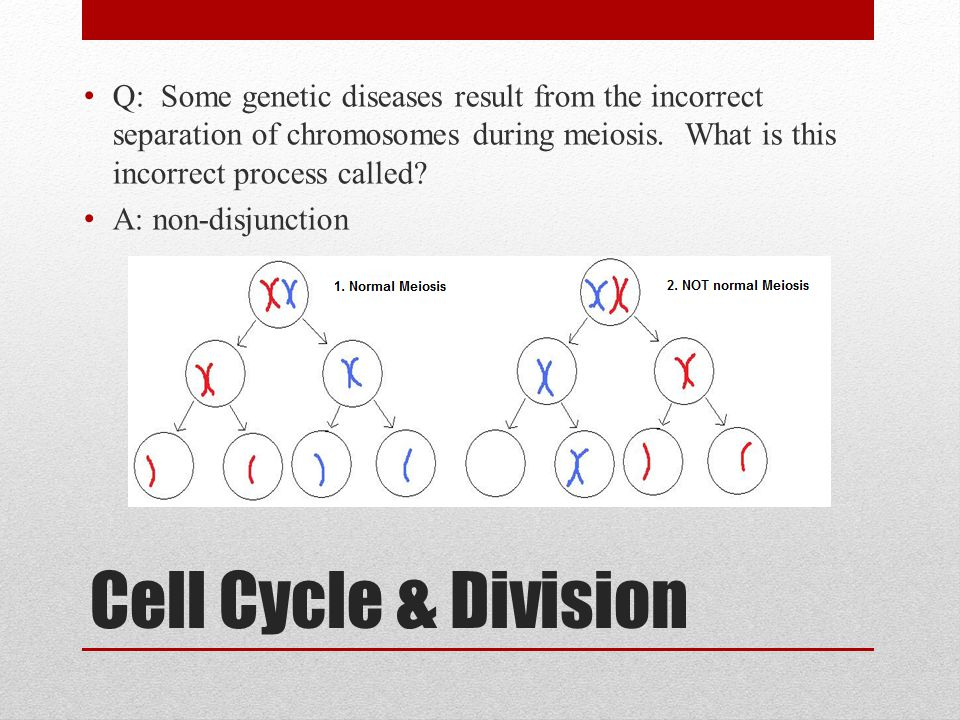 Cell Cycle & Division Q: Some genetic diseases result from the incorrect separation of chromosomes during meiosis. What is this incorrect process call