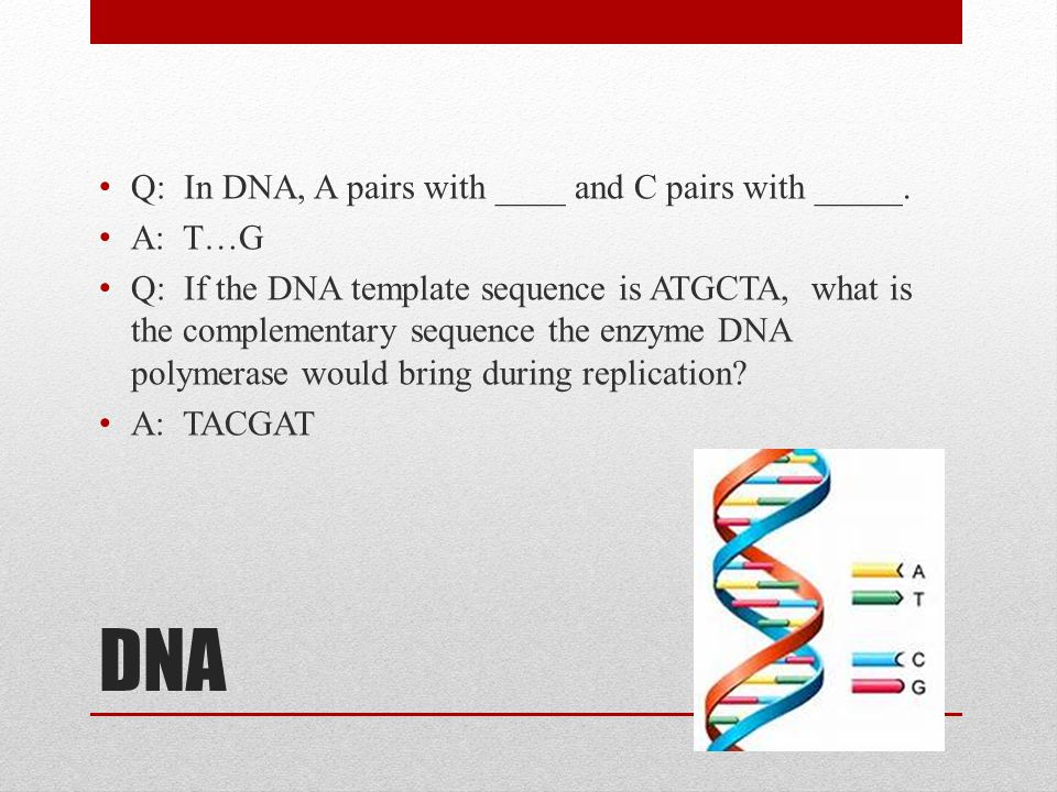 DNA Q: In DNA, A pairs with ____ and C pairs with _____. A: T…G Q: If the DNA template sequence is ATGCTA, what is the complementary sequence the enzy