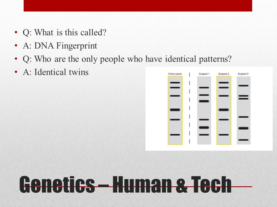 Genetics – Human & Tech Q: What is this called? A: DNA Fingerprint Q: Who are the only people who have identical patterns? A: Identical twins