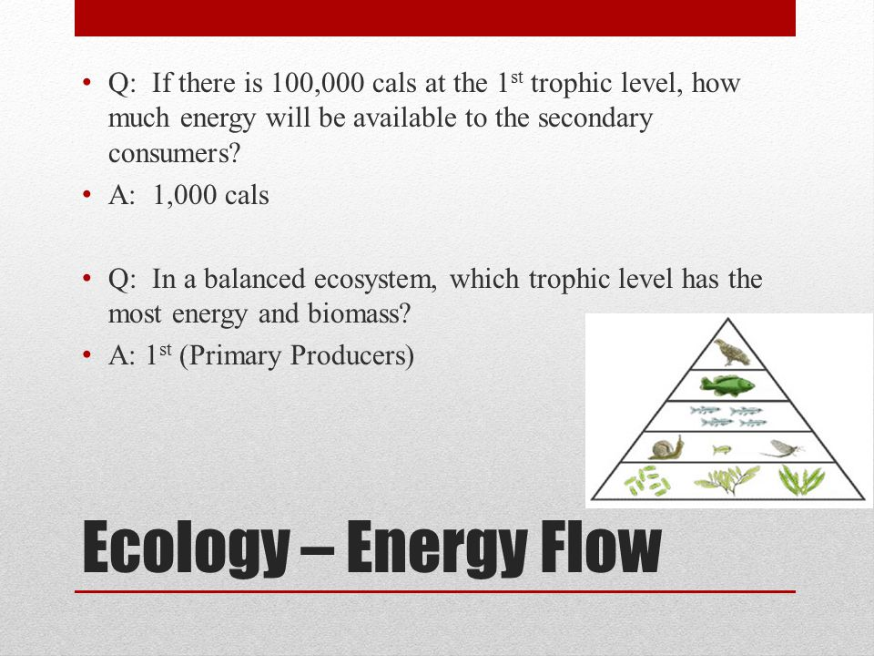 Ecology – Energy Flow Q: If there is 100,000 cals at the 1 st trophic level, how much energy will be available to the secondary consumers? A: 1,000 ca