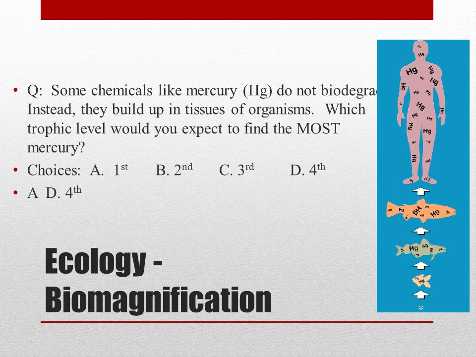 Ecology - Biomagnification Q: Some chemicals like mercury (Hg) do not biodegrade. Instead, they build up in tissues of organisms. Which trophic level
