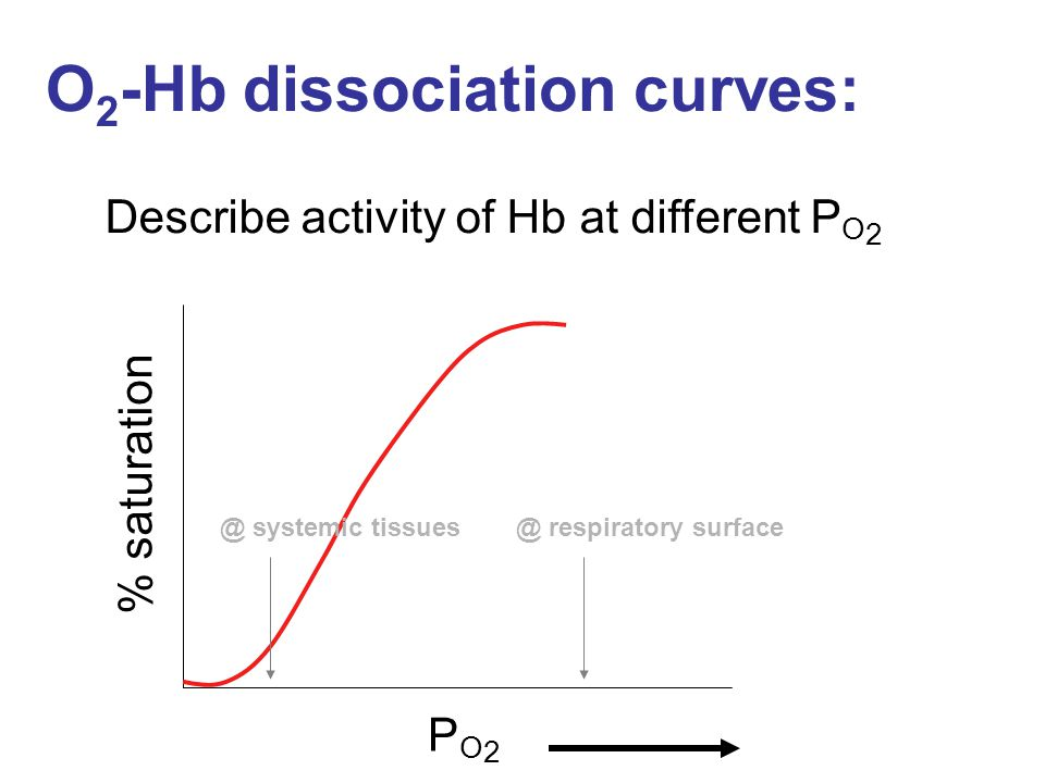 O 2 -Hb dissociation curves: Describe activity of Hb at different P O 2 % saturation PO2PO2 @ systemic tissues@ respiratory surface