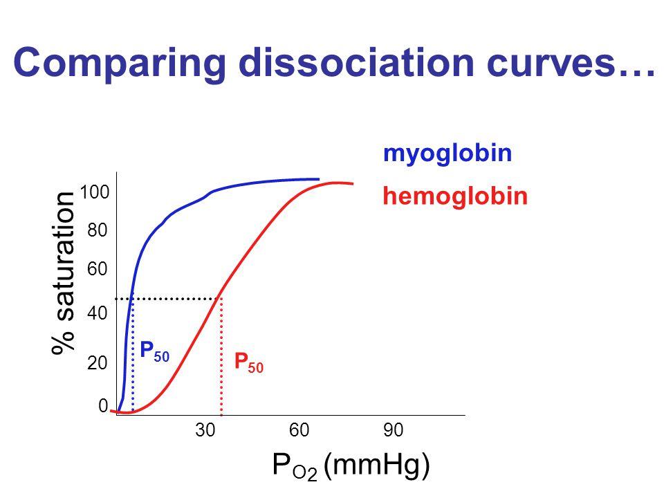 Comparing dissociation curves… myoglobin P 50 % saturation P O 2 (mmHg) hemoglobin 0 20 40 60 80 100 306090